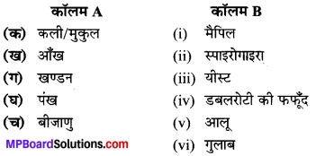 MP Board Class 7th Science Solutions Chapter 12 पादप में जनन 2