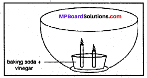Mp Board Class 8 Chapter 6