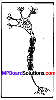 Mp Board Class 8 Science Chapter 8