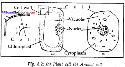 Mp Board Class 8 Science Solution Chapter 8