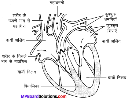 MP Board Class 10th Science Solutions Chapter 6 जैव प्रक्रम 17