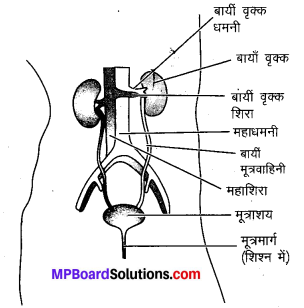 MP Board Class 10th Science Solutions Chapter 6 जैव प्रक्रम 18