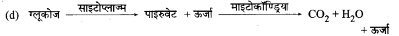MP Board Class 10th Science Solutions Chapter 6 जैव प्रक्रम 6