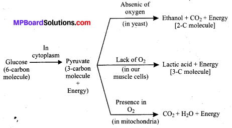 MP Board Class 10th Science Solutions Chapter 6 Life Processes 1