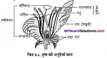 MP Board Class 10th Science Solutions Chapter 8 जीव जनन कैसे करते है 1
