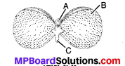 MP Board Class 10th Science Solutions Chapter 8 जीव जनन कैसे करते है 2