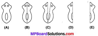 MP Board Class 10th Science Solutions Chapter 8 जीव जनन कैसे करते है 4