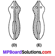 MP Board Class 10th Science Solutions Chapter 8 जीव जनन कैसे करते है 5
