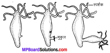 MP Board Class 10th Science Solutions Chapter 8 जीव जनन कैसे करते है 8