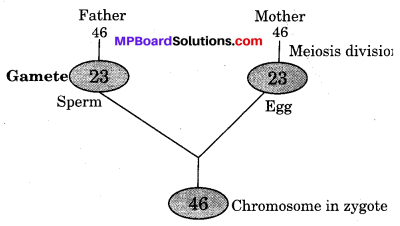 MP Board Class 10th Science Solutions Chapter 9 Heredity and Evolution 3