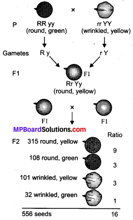 MP Board Class 10th Science Solutions Chapter 9 Heredity and Evolution 6