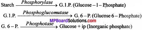 MP Board Class 11th Biology Solutions Chapter 11 पौधों में परिवहन - 9