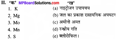 MP Board Class 11th Biology Solutions Chapter 12 खनिज पोषण - 3