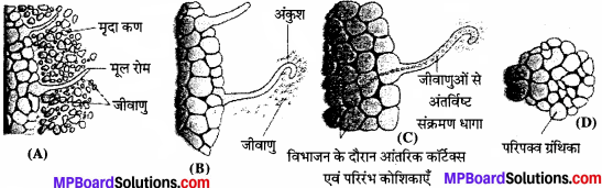 MP Board Class 11th Biology Solutions Chapter 12 खनिज पोषण - 7