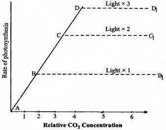 MP Board Class 11th Biology Solutions Chapter 13 उच्च पादपों में प्रकाश-संश्लेषण - 19