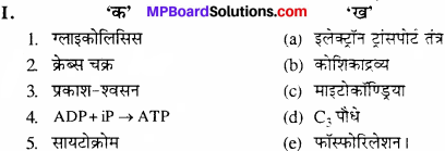 MP Board Class 11th Biology Solutions Chapter 14 पादप में श्वसन - 8