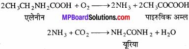 MP Board Class 11th Biology Solutions Chapter 19 उत्सर्जी उत्पाद एवं उनका निष्कासन - 2