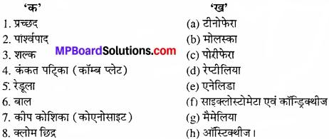 MP Board Class 11th Biology Solutions Chapter 4 प्राणि जगत - 1