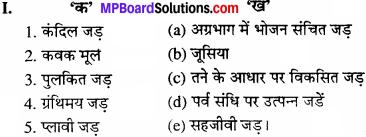 MP Board Class 11th Biology Solutions Chapter 5 पुष्पी पादपों की आकारिकी - 22
