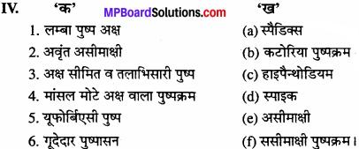 MP Board Class 11th Biology Solutions Chapter 5 पुष्पी पादपों की आकारिकी - 26