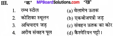 MP Board Class 11th Biology Solutions Chapter 6 पुष्पी पादपों का शारीर - 16