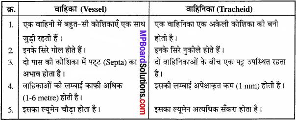 MP Board Class 11th Biology Solutions Chapter 6 पुष्पी पादपों का शारीर - 4
