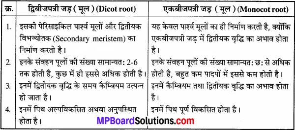 MP Board Class 11th Biology Solutions Chapter 6 पुष्पी पादपों का शारीर - 6