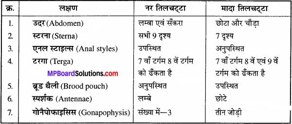 MP Board Class 11th Biology Solutions Chapter 7 प्राणियों में संरचनात्मक संगठन - 24