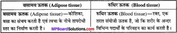 MP Board Class 11th Biology Solutions Chapter 7 प्राणियों में संरचनात्मक संगठन - 8