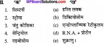 MP Board Class 11th Biology Solutions Chapter 8 कोशिका जीवन की इकाई - 2