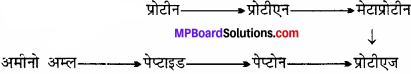 MP Board Class 11th Biology Solutions Chapter 9 जैव अणु - 19