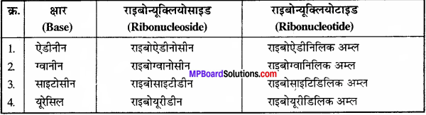 MP Board Class 11th Biology Solutions Chapter 9 जैव अणु - 20