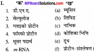 MP Board Class 11th Biology Solutions Chapter 9 जैव अणु - 25