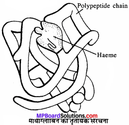 MP Board Class 11th Biology Solutions Chapter 9 जैव अणु - 4