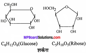 MP Board Class 11th Biology Solutions Chapter 9 जैव अणु - 6