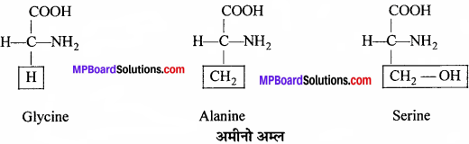 MP Board Class 11th Biology Solutions Chapter 9 जैव अणु - 7