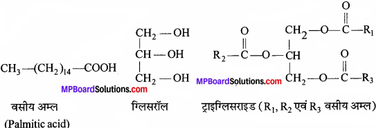MP Board Class 11th Biology Solutions Chapter 9 जैव अणु - 8