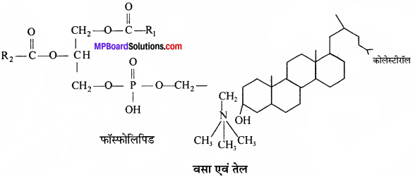 MP Board Class 11th Biology Solutions Chapter 9 जैव अणु - 9