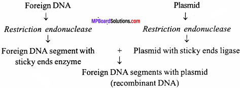 MP Board Class 12th Biology Important Questions Chapter 11 Biotechnology Principles and Processes 4