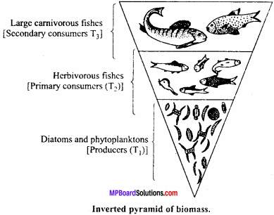 MP Board Class 12th Biology Important Questions Chapter 14 Ecosystem 10