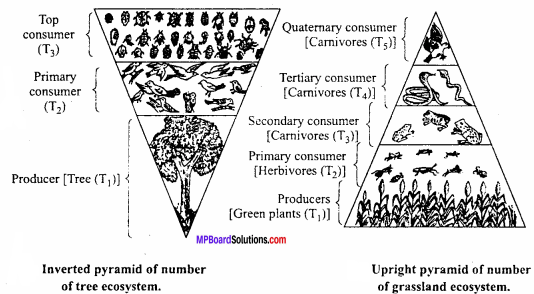 MP Board Class 12th Biology Important Questions Chapter 14 Ecosystem 9
