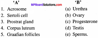 MP Board Class 12th Biology Important Questions Chapter 3 Human Reproduction 1