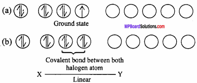 MP Board Class 12th Chemistry Important Questions Chapter 7 The p-Block Elements 15
