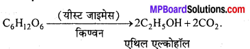 MP Board Class 12th Chemistry Solutions Chapter 11 ऐल्कोहॉल, फीनॉल तथा ईथर - 141