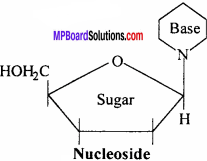MP Board Class 12th Chemistry Solutions Chapter 14 Biomolecules - 15