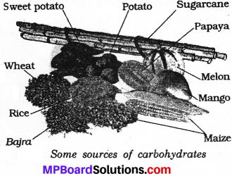 MP Board Class 6th Science Solutions Chapter 2 Components of Food img 11