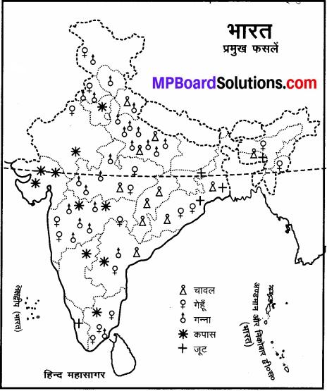 MP Board Class 6th Social Science Solutions Chapter 25 भारत की प्रमुख फसलें img 2