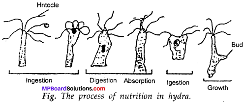 MP Board Class 7th Science Solutions Chapter 1 Nutrition in Plants img-7