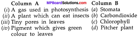 MP Board Class 7th Science Solutions Chapter 1 Nutrition in Plants img-9