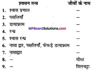 MP Board Class 7th Science Solutions Chapter 10 जीवों में श्वसन 4